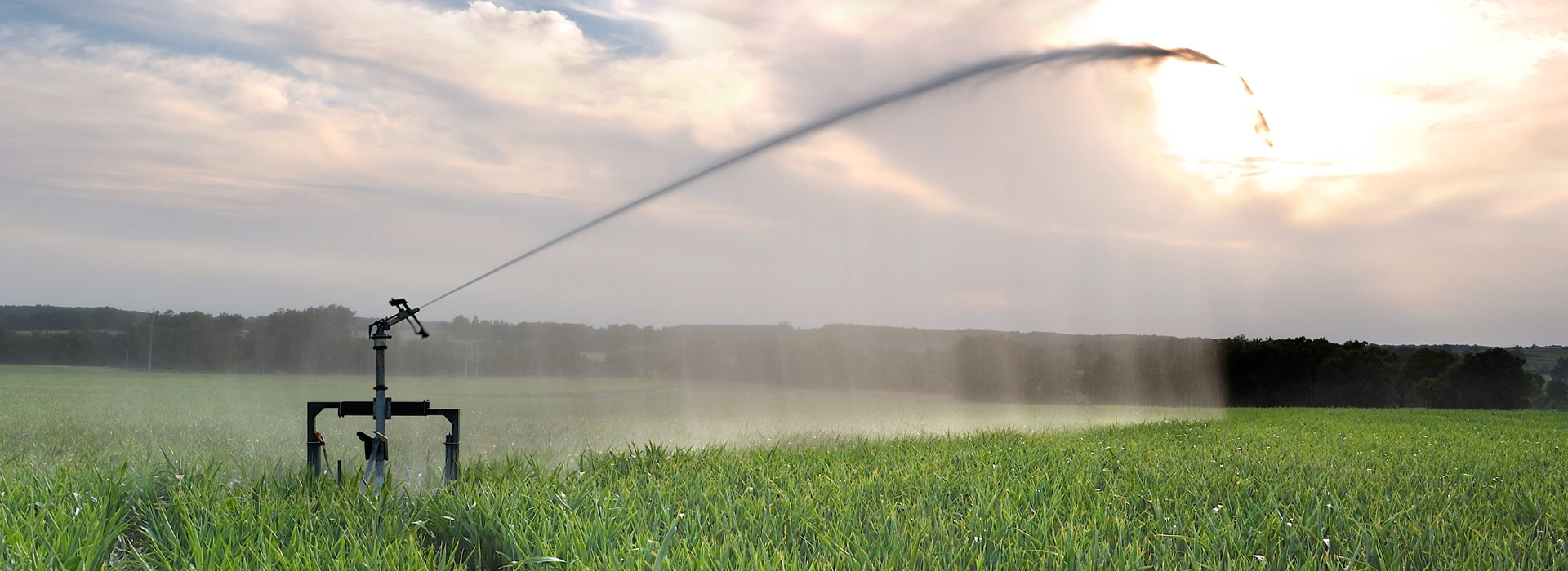 Large field with watering jet
